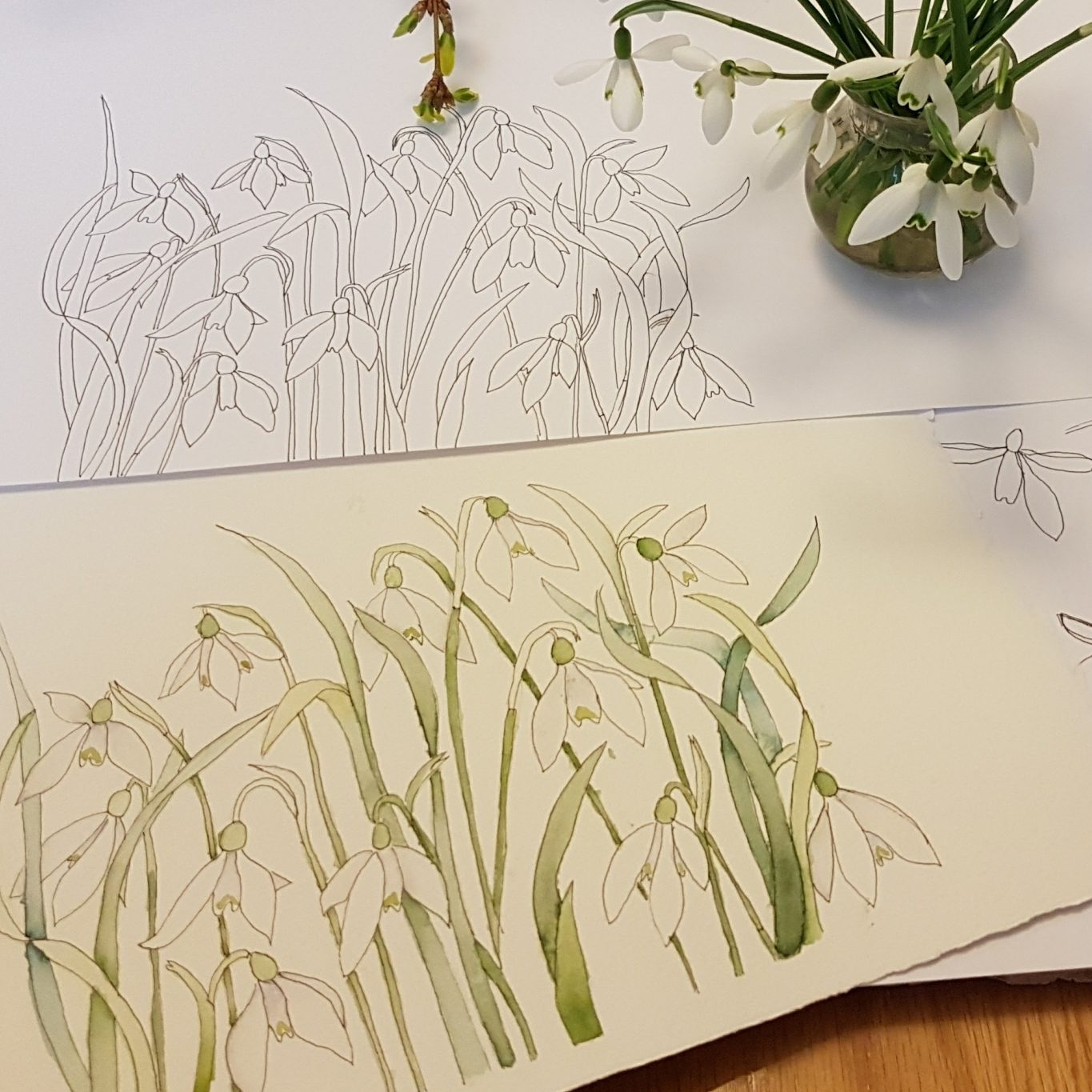 Snowdrops Watercolour Flowers with Janet Edwards at Cambridge Art Makers painting course