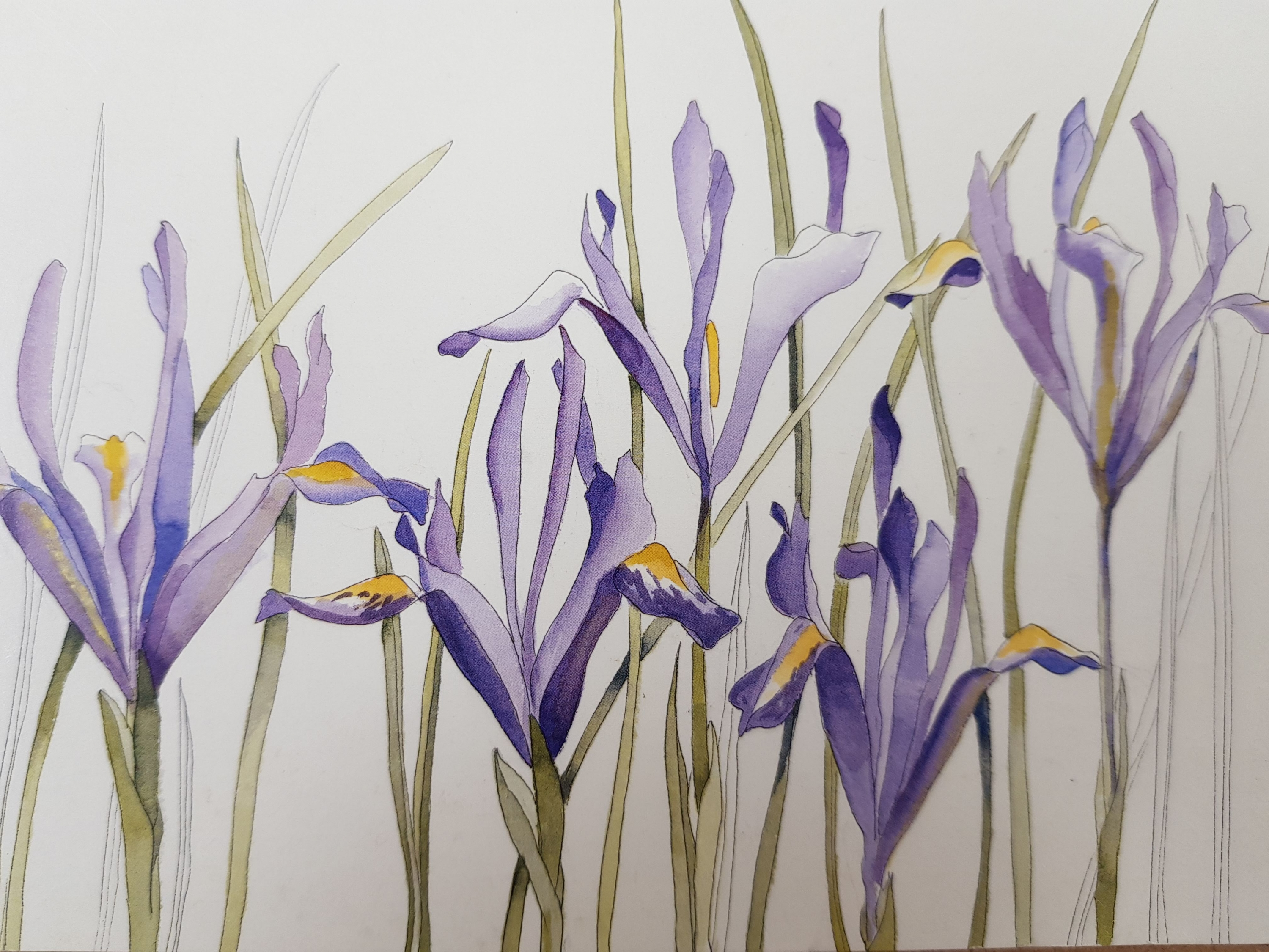 Watercoour Flowers with Janet Edwards at Cambridge Art Makers